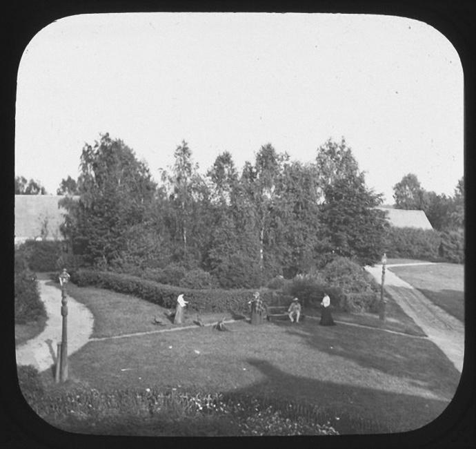 Двор перед домом Ячевских в Рыльково. Лето 1903 года