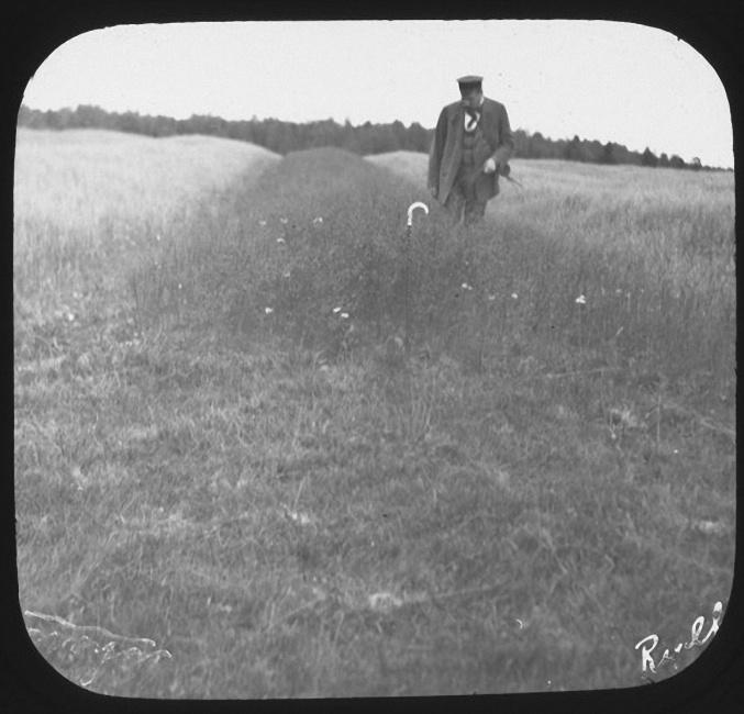 Профессор Артур Ячевский осматривает поле льна. Деревня Рыльково. Лето 1903 года