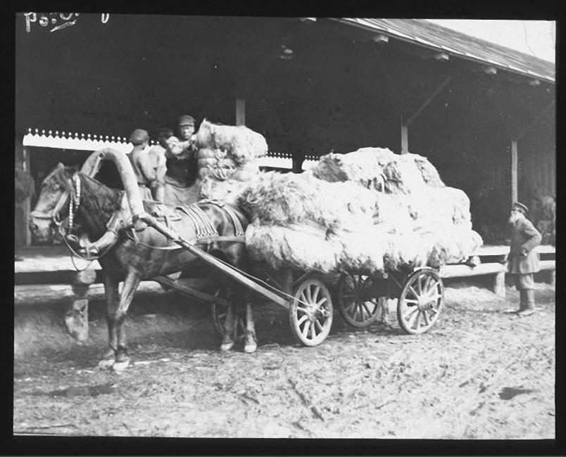 Сельскохозяйственные рабочие грузят лен на телегу. Лето 1903 года