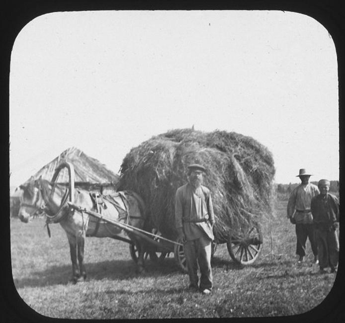 Cельскохозяйственный рабочий стоит перед телегой с сеном. Лето 1903 года
