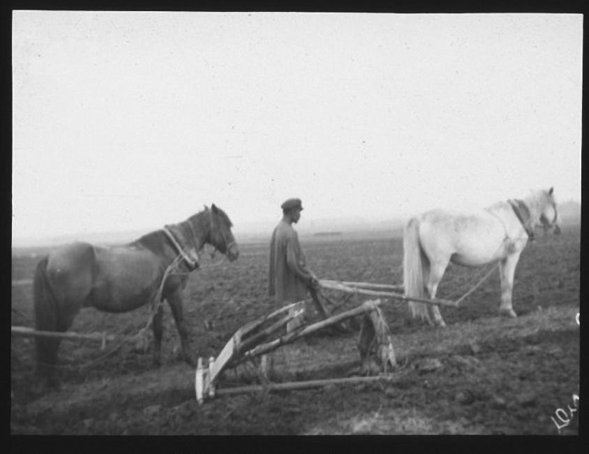 Сельскохозяйственный рабочий с сохой в поле. Лето 1903 года