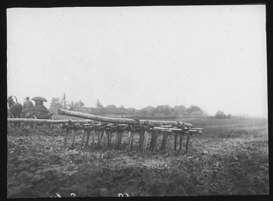 Бороны в середине поля. Лето 1903 года